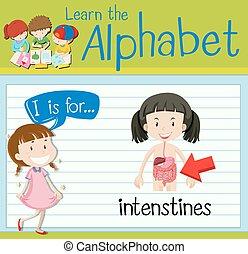 Flashcard letter I is for intenstines illustration