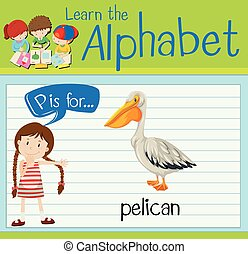 Flashcard letter P is for pelican illustration