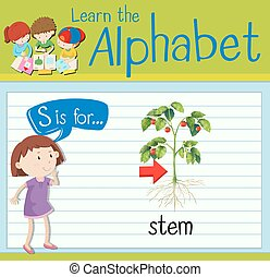 flashcard, s, lettera, gambo