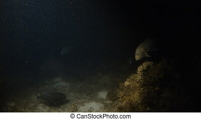 Flashlight underwater shows fishes - A medium shot of a...