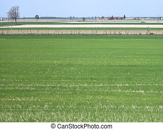 Flat cultivated land - Landscape of cultivated land in...