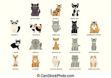 Flat domestic breeds of cats