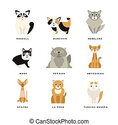 Flat domestic breeds of cats