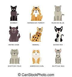 Flat domestic breeds of cats - Different flat breeds of...