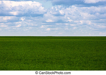 flat green soybean field with cloudy sky and focus on background with optically blurred foreground