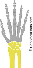Flat Icon of Hand Bones on White Background. Vector...