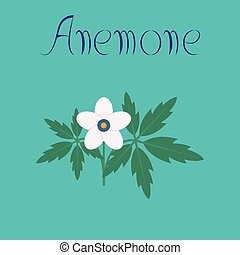 flat illustration on background flower Anemone - flat...