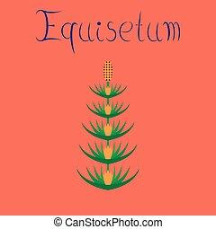 flat illustration on background wild flower Equisetum - flat...