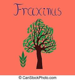 flat illustration stylish background plant Fraxinus - flat...