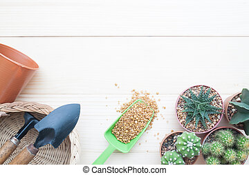 Flat lay gardening table with Cactus plants in pot and garden tools