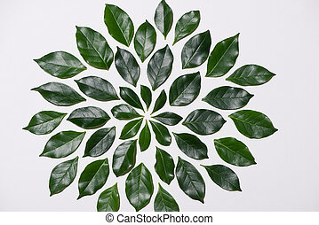 Flat lay of green leaves pattern on white background