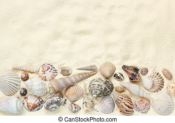 Flat lay of seashells on white sand background, concept of beach vacation, top view with copy space