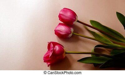 Flat lay pink background, beautiful red tulips. Flower sales concept