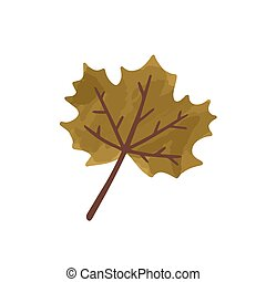Flat vector cartoon illustration of autumn withered brown leaf. Fall dried canadian maple icon isolated on white background.
