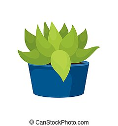Flat vector icon of cactus with green leaves in blue ceramic pot. Succulent plant. Natural home decor element. Small houseplant