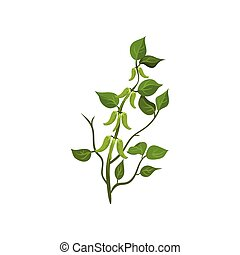 Flat vector icon of flowering snow peas with bright green leaves. Leguminous plant. Agricultural crop