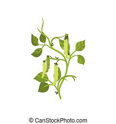 Flat vector icon of haricot bean with green pods and leaves....