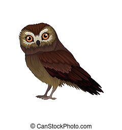 Flat vector icon of northern saw-whet owl. Small wild bird with orange eyes and brown plumage. Wildlife theme