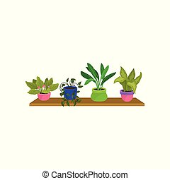 Flat vector set of 4 houseplants in colorful ceramic pots. Cute green decorative plants on wooden shelf. Nature element for home interior