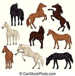 Flat vector set of brown, beige and black horses in different poses. Big mammal animals with hoofs, flowing mane and tail