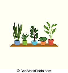 Flat vector set of different houseplants on wooden shelf. Decorative plants in colorful ceramic flowerpots