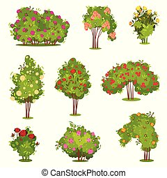 Flat vector set of roses bushes. Green shrubs with beautiful flowers. Garden plants. Natural landscape elements