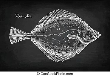 Chalk sketch of flounder - Flatfish. Chalk sketch of ...