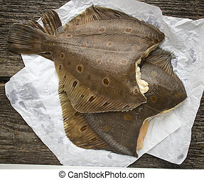 flatfish - freshly caught flounder on white paper