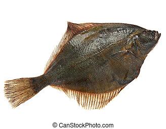 Flatfish - Raw fresh flatfish fish detail on white