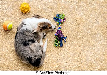 flatlay, junger hund, und, hund, spielzeuge, liegen, an, a, brauner, boden, copyspace