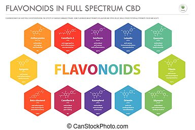 Flavonoids in Full Spectrum CBD with Structural Formulas horizontal business infographic