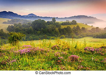 flavored morning - savory flowers in dew on the meadow in...