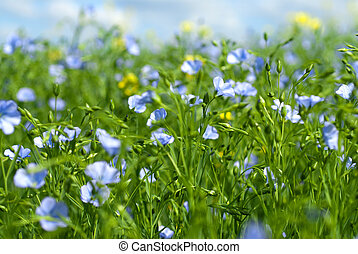 flax, blomster
