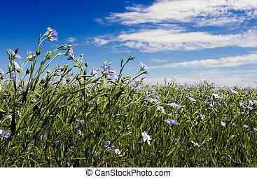 Blue sky and blue flax flowers