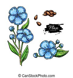 Flax flower and seed vector superfood drawing set.