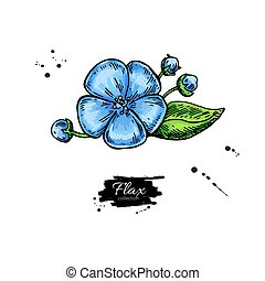 Flax flower vector superfood drawing. Isolated hand drawn illustration on white background. Organic healthy food. Great for banner, poster, label
