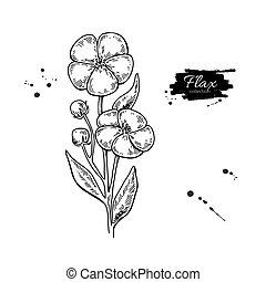 Flax flower vector superfood drawing. Isolated hand drawn ...
