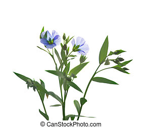 Flax flowers isolated on white background