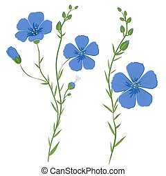 Flax, Linum usitatissimum - Vector illustration of flax ...