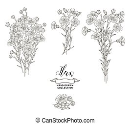 Flax plant collection. Hand drawn flowers, branches and seeds of flax isolated on white background. Vector illustration botanical. Vintage engraving style.