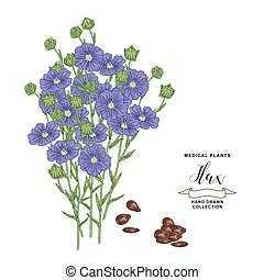 Flax plant. Hand drawn flowers, branches and seeds of flax. Medical hebs collection. Vector illustration botanical. Vintage engraving.
