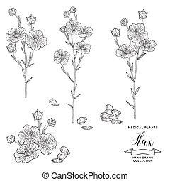 Flax plant. Hand drawn flowers, branches and seeds of flax. Medical hebs collection. Vector illustration botanical. Vintage engraving. Black and white graphic.
