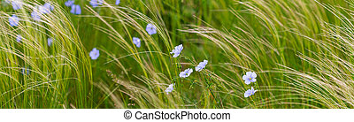 Flax plant on field in wild nature
