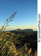 Flax plants in dawn light - Dramatic dawn sky breaking ...