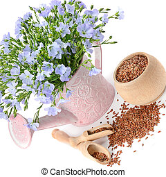 Flax seeds and a bouquet of flax flowers in a decorative watering can isolated on a white .
