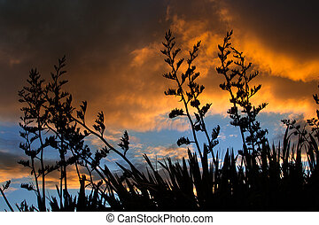 Flax Sunset