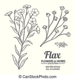 flax vector set - flax plant vector set on white background