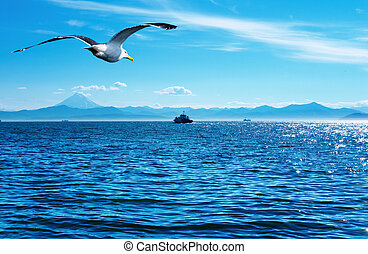 Flaying seagull - Blue sky, ocean and flaying seagull