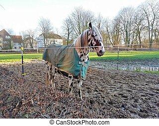 flea-bitten horse with long mane in field against sky