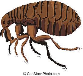 flea - household pest, pest control, parasites piercing skin...